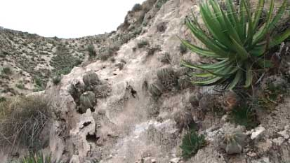 Геохинтонии в местах обитания