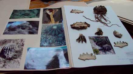 Лист 21519 от 26.09.1991 из гербария Хинтонов с типовым экземпляром Geohintoniamexicana