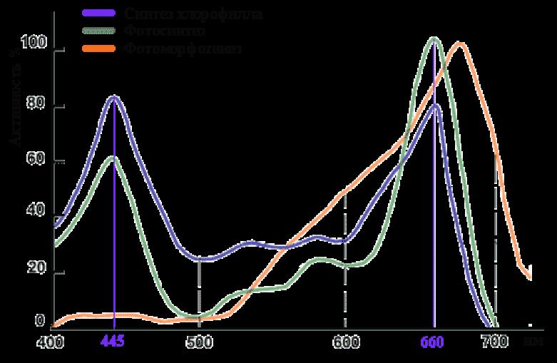 График активности фотобиологических процессов при поглощении растениями различных длин волн солнечного света