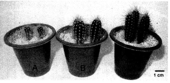 Сравнение размеров сеянцев