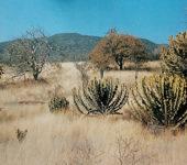 Зоны распространения суккулентов юга Африки
