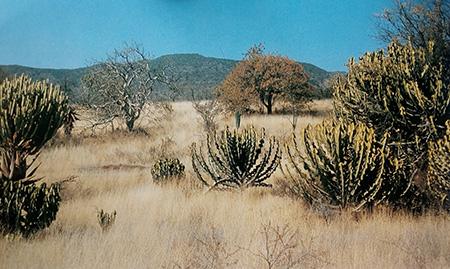 Зоны распространения суккулентов юга Африки. Часть 2