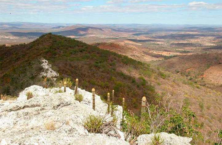 Arrojadoa marylanae растущая на кварцевой гряде горы Серра-Эскура, единственное место произрастания этого уникального растения