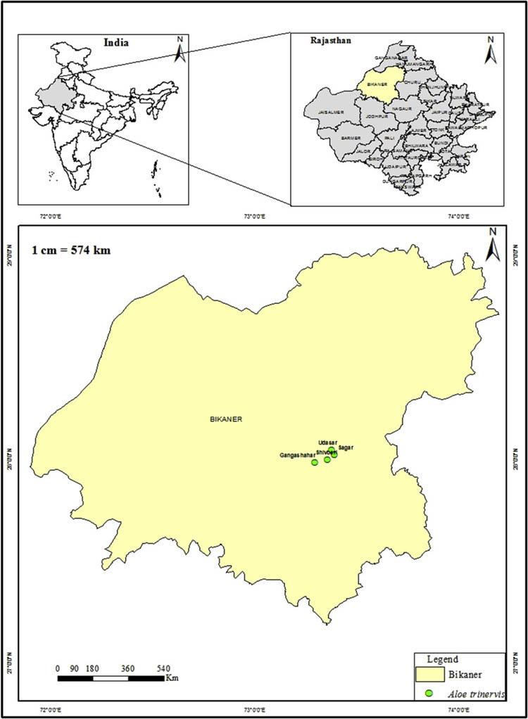 Карта, показывающая места, где нашли Aloe trinervis в районе Биканер, Раджастхан
