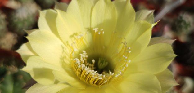 Cactusist25