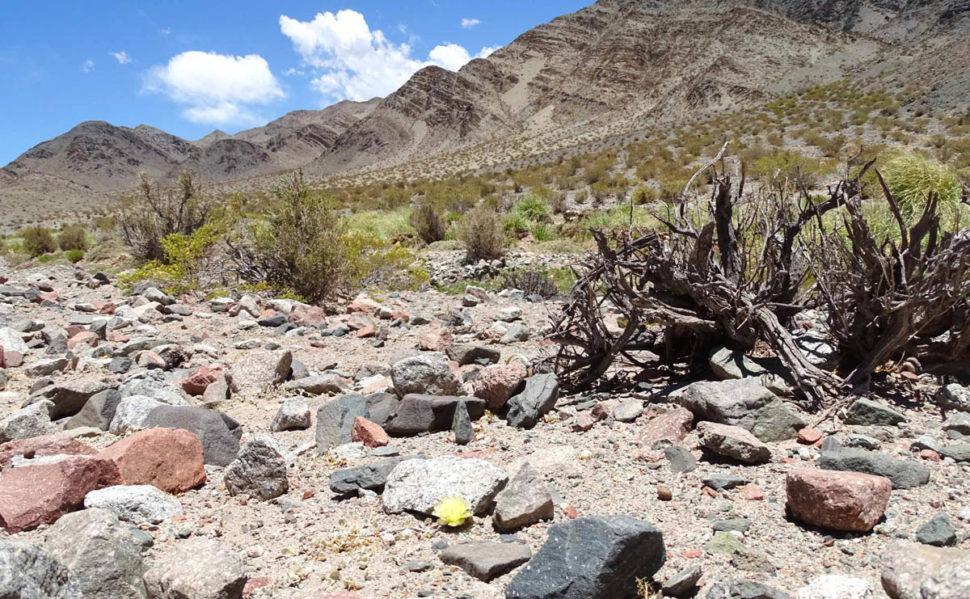 Puna bonnieae растет в живописных местах к западу от Фиамбалы.
