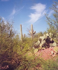 Пустыня Сонора, Аризона --  Фото Владиславы Ратушной (Блэксбург, Вирджиния)
